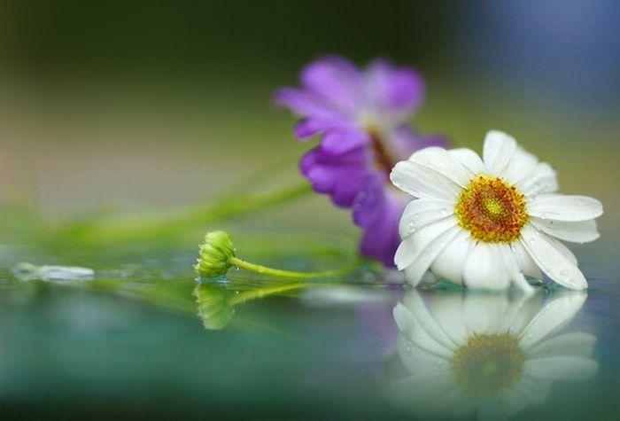 Цветы и роса сад и огород