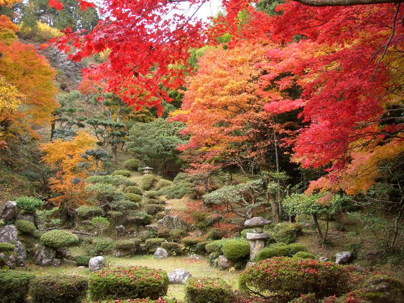 Японский сад сад и огород